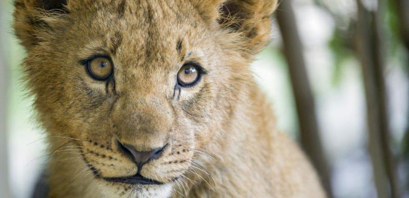 Such an adorable cub!