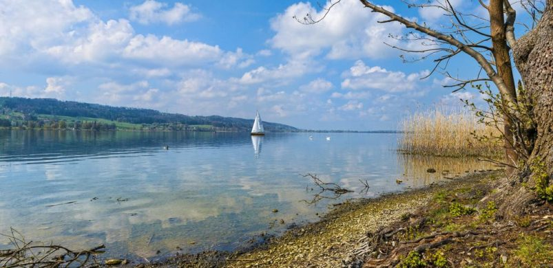 The shore of the Greifensee