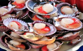 Time for Scallop Recipes