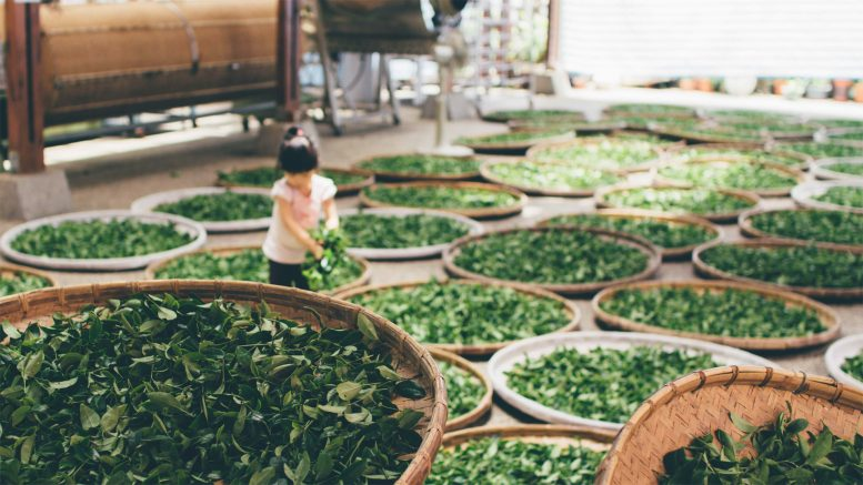 Why You Should Drink Green Tea More Often?