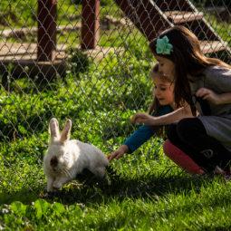 Run Rabbit, Run!