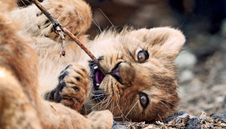 A twig is the best toy!