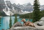 Canadian Mountain Wiener